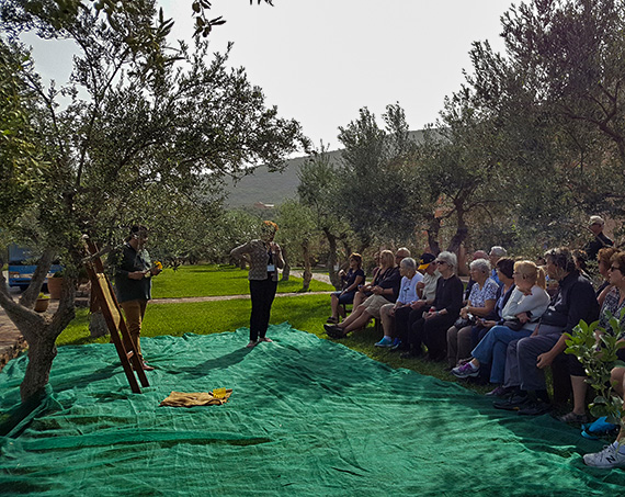 Liotrivi Olivenernte